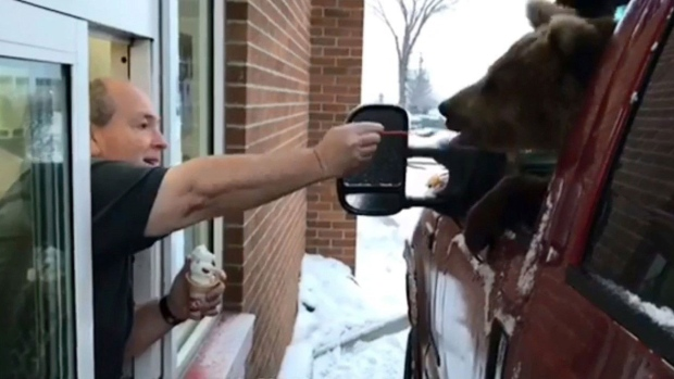 Canadian Zoo Charged After Taking Kodiak Bear to a Drive-Thru for an Ice Cream