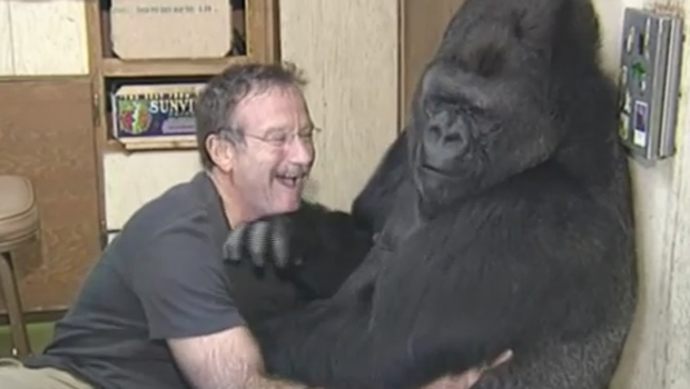 Koko the Gorilla Has Died at 46
