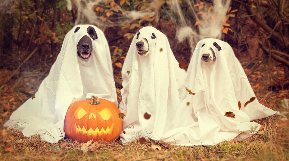 How Much Will the Average American Spend on Halloween?
