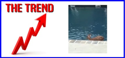"The KICKS 106.3 Morning Trend: ""Fawning"" Over A Pool!"