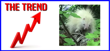 The KICKS 106.3 Morning Trend: How About An Albino Porcupine?