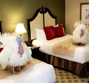 Turkeys Arrive In Washington, DC... And Not The Ones That Run The Country!