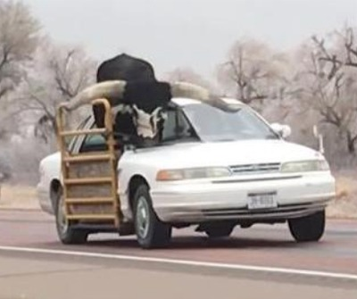 """""""Holy Cow!"""" You See Some Weird Things On The Highways  Of Nebraska!"""