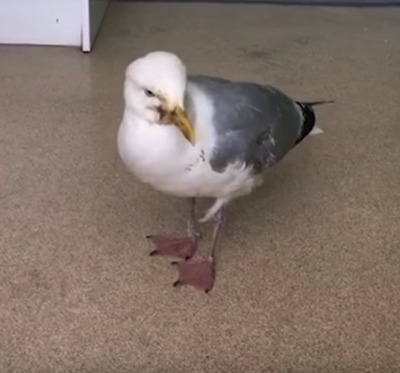 There's A Rash Of Drunk Seagulls In England!