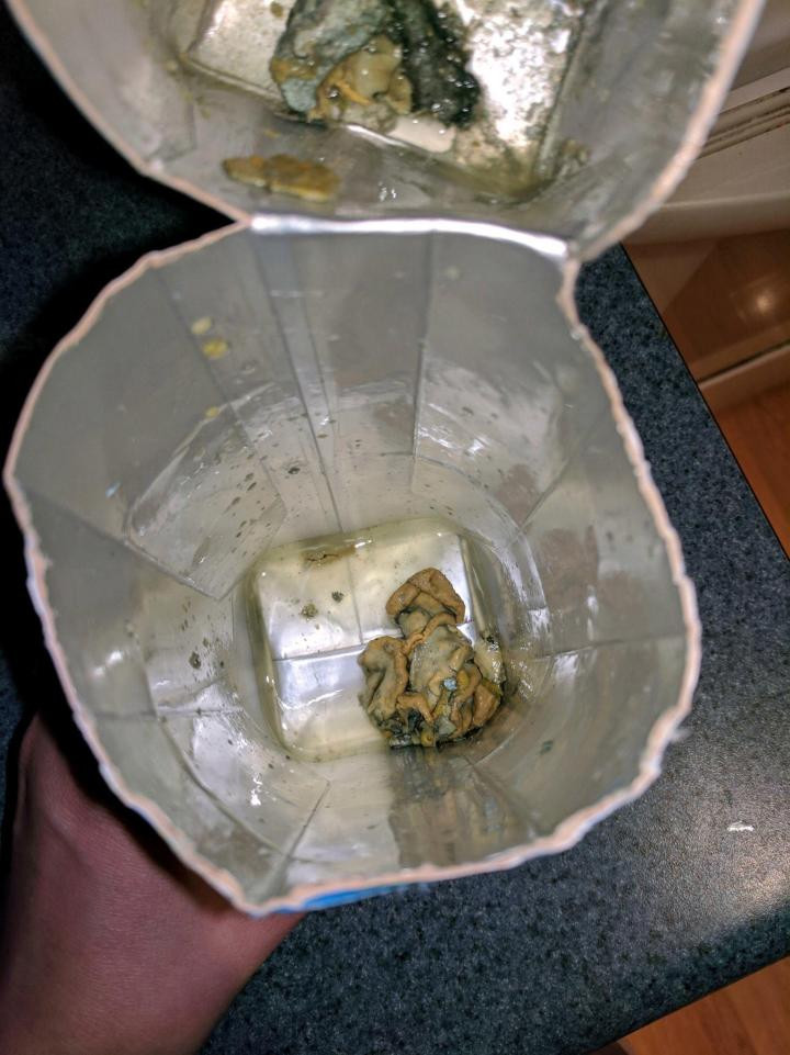 She Found This In Her Cocount Water!