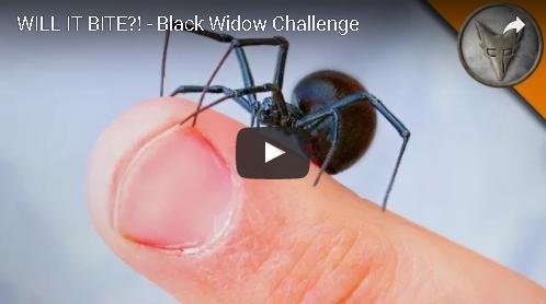 The Black Widow Challenge