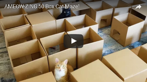 A Cat Maze Made Of Fifty Boxes