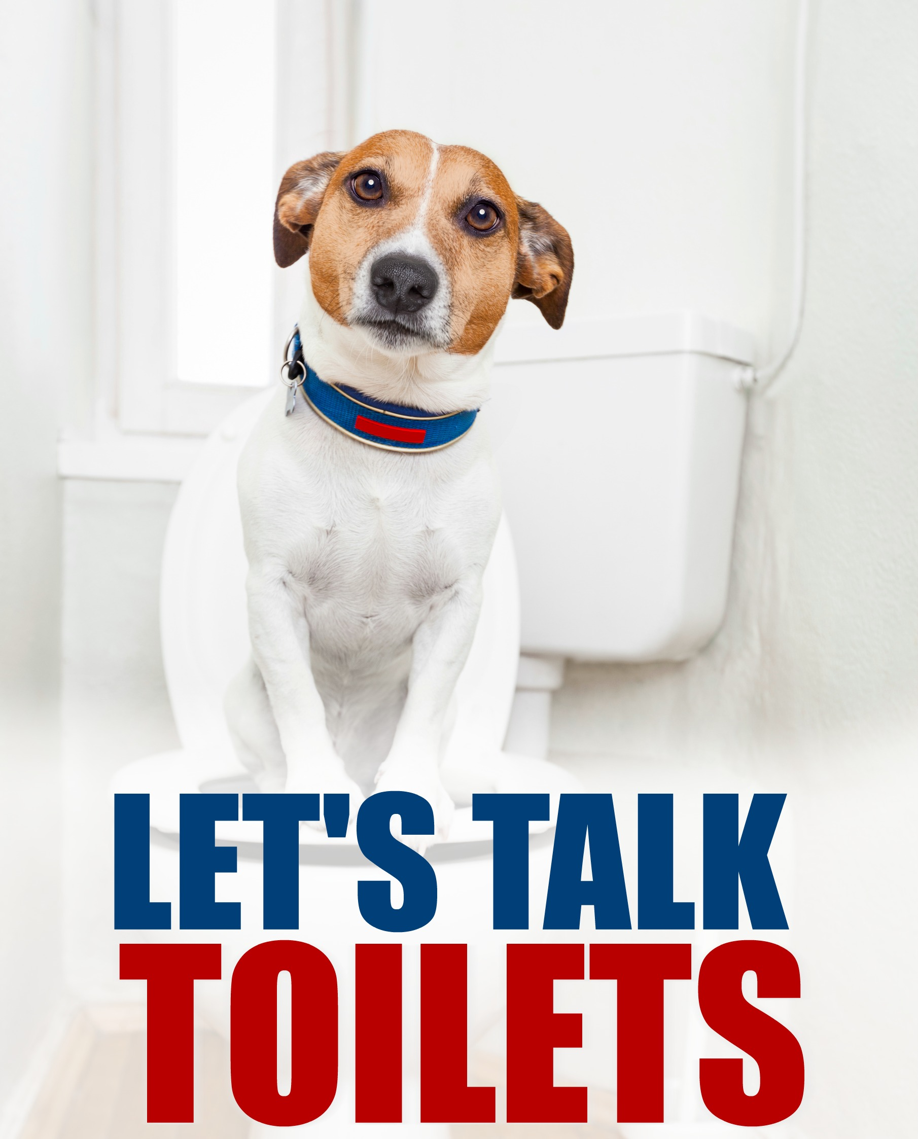 A Casual Talk About Toilets