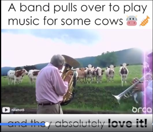 A Band Play For Some Cows & They Love It (Yes, You Read That Right)