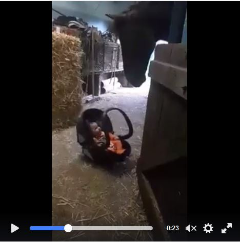 A Horse Rocking a Baby - TOO CUTE