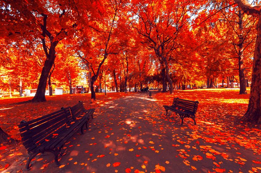 Autumn's Changes