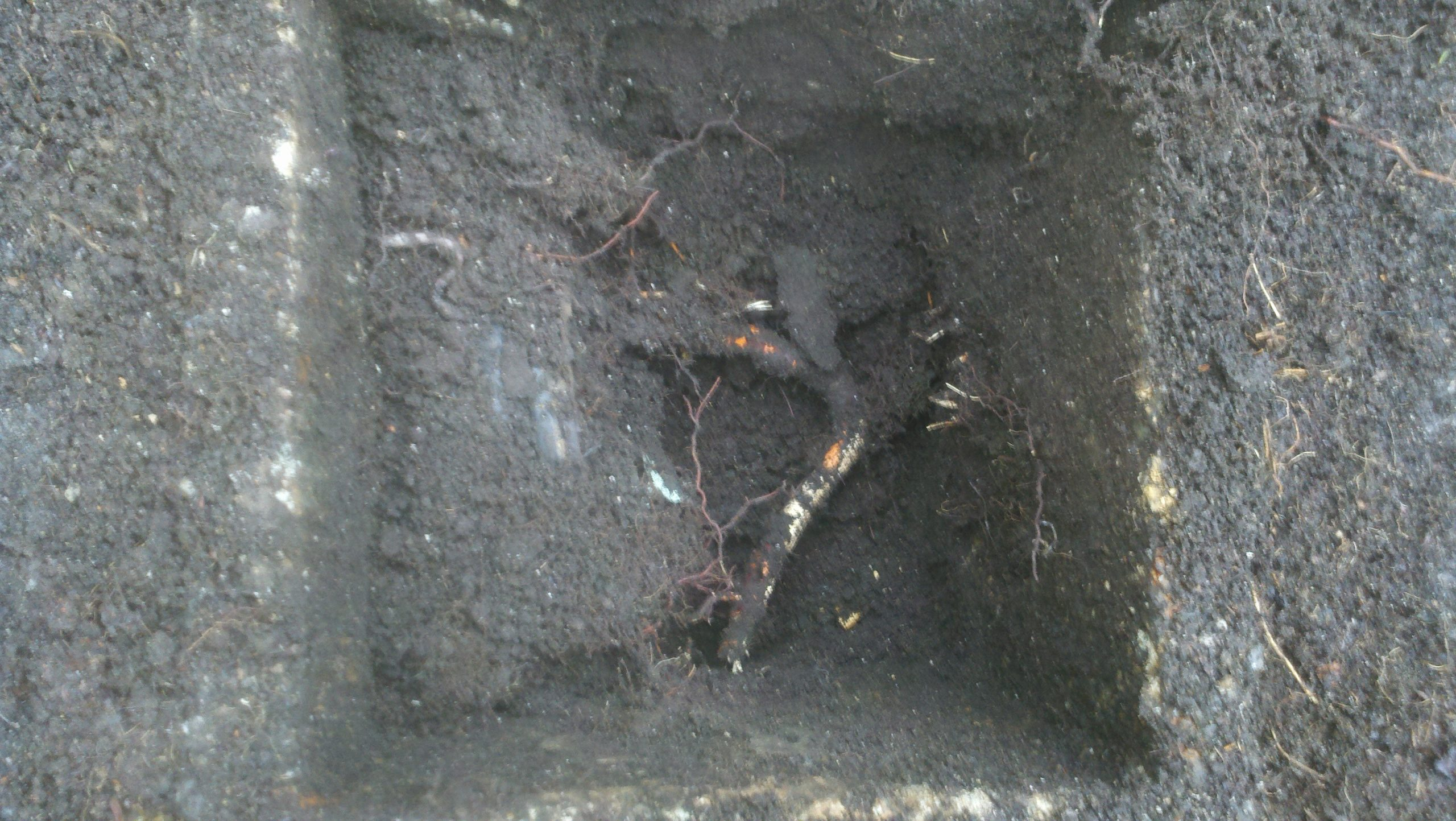 Outside Drain Care: The Root of the Problem