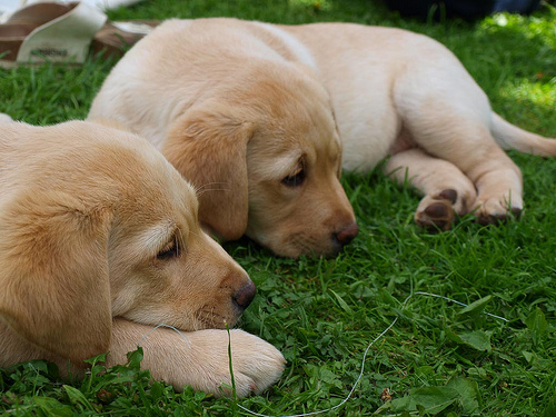 Abandoned Puppies Found on Island