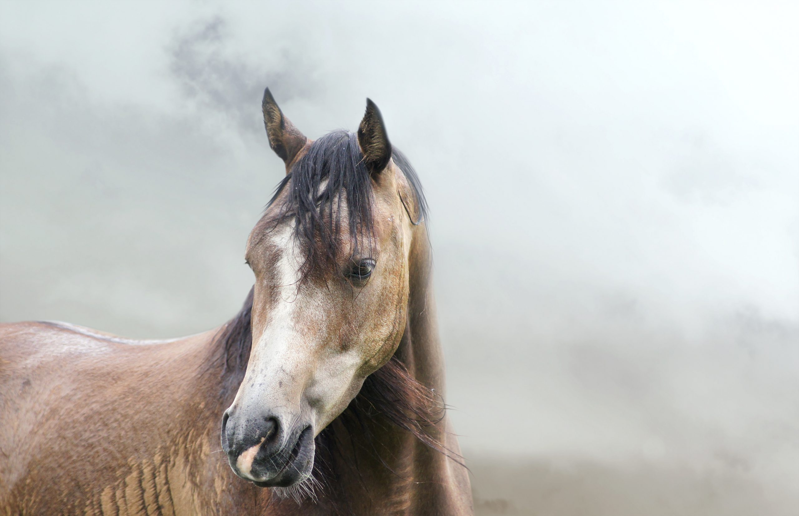 Lessons From A Horse