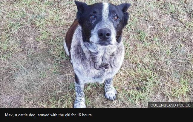 Highlight from Jim & Lynette: Dog Saves Girl