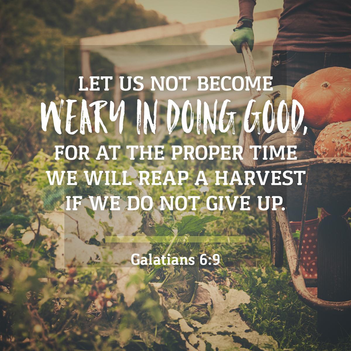 Galatians 6:9 Daily Verse