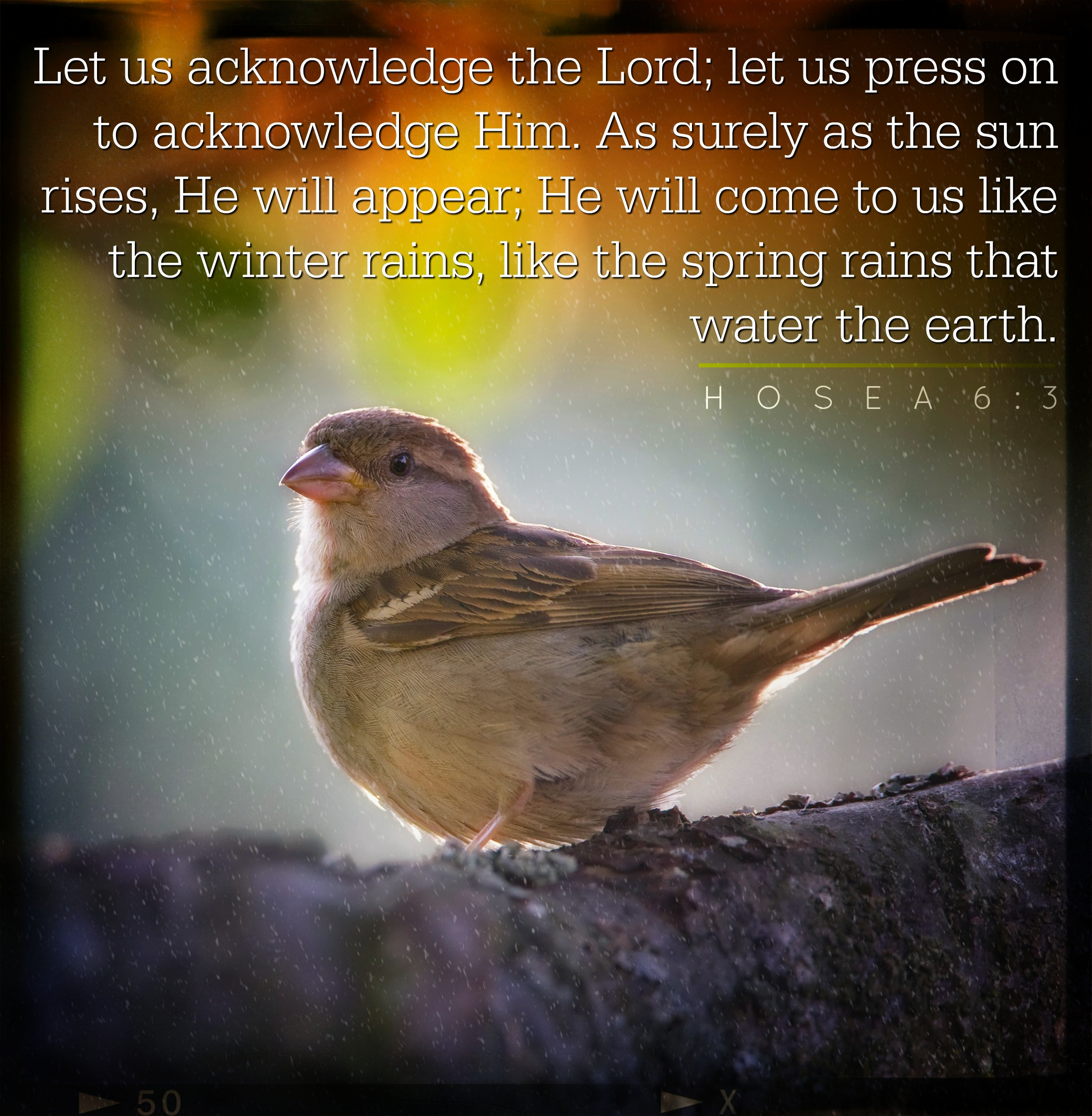 Daily Verse - Hosea 6:3