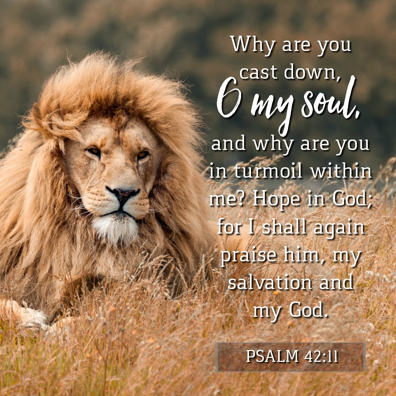 Daily Verse: Psalm 42:11