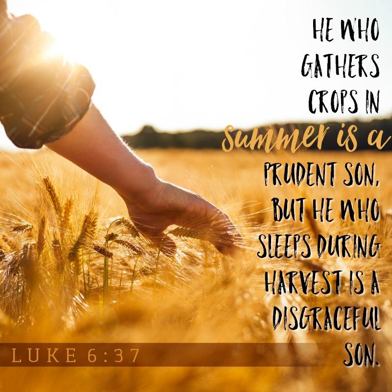 Daily Verse: Proverbs 10:5