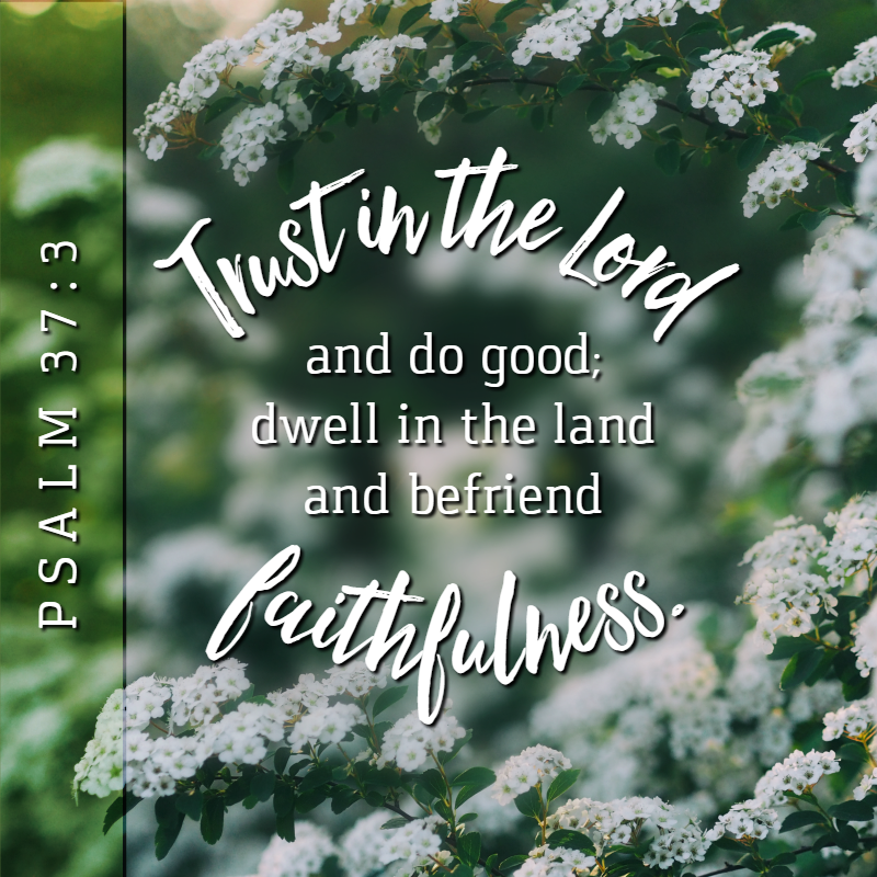 Daily Verse: Psalm 37:3