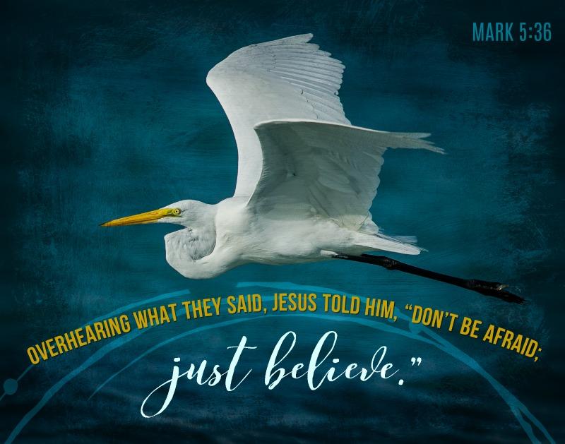 Daily Verse: Mark 5:36