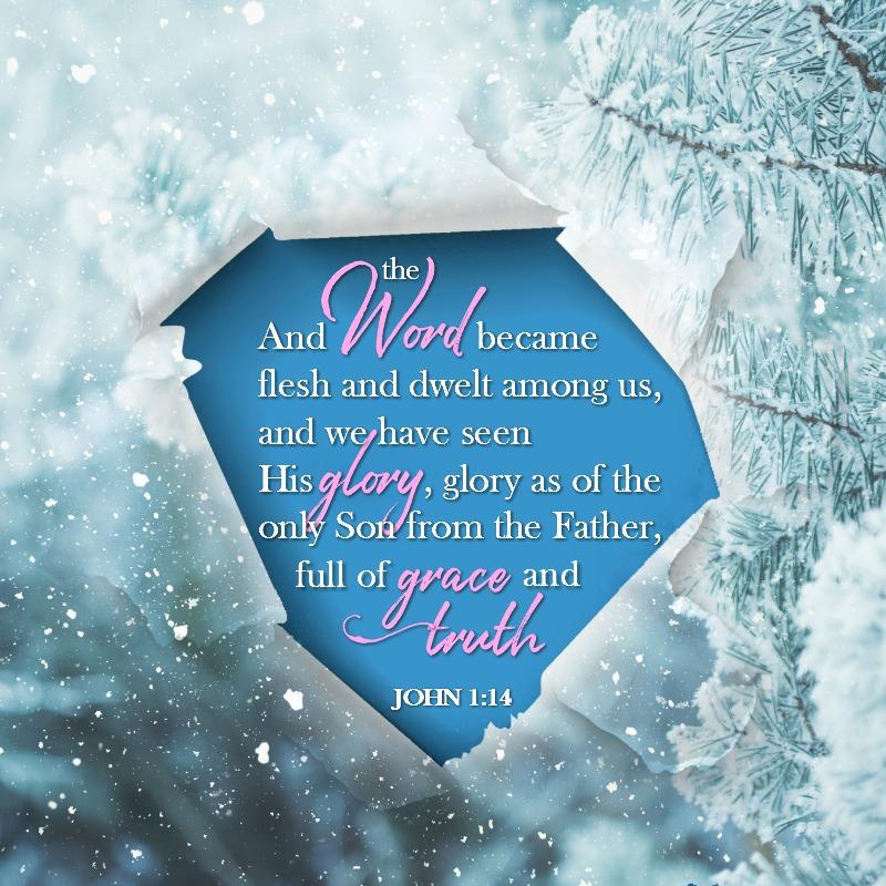 Daily Verse: John 1:14