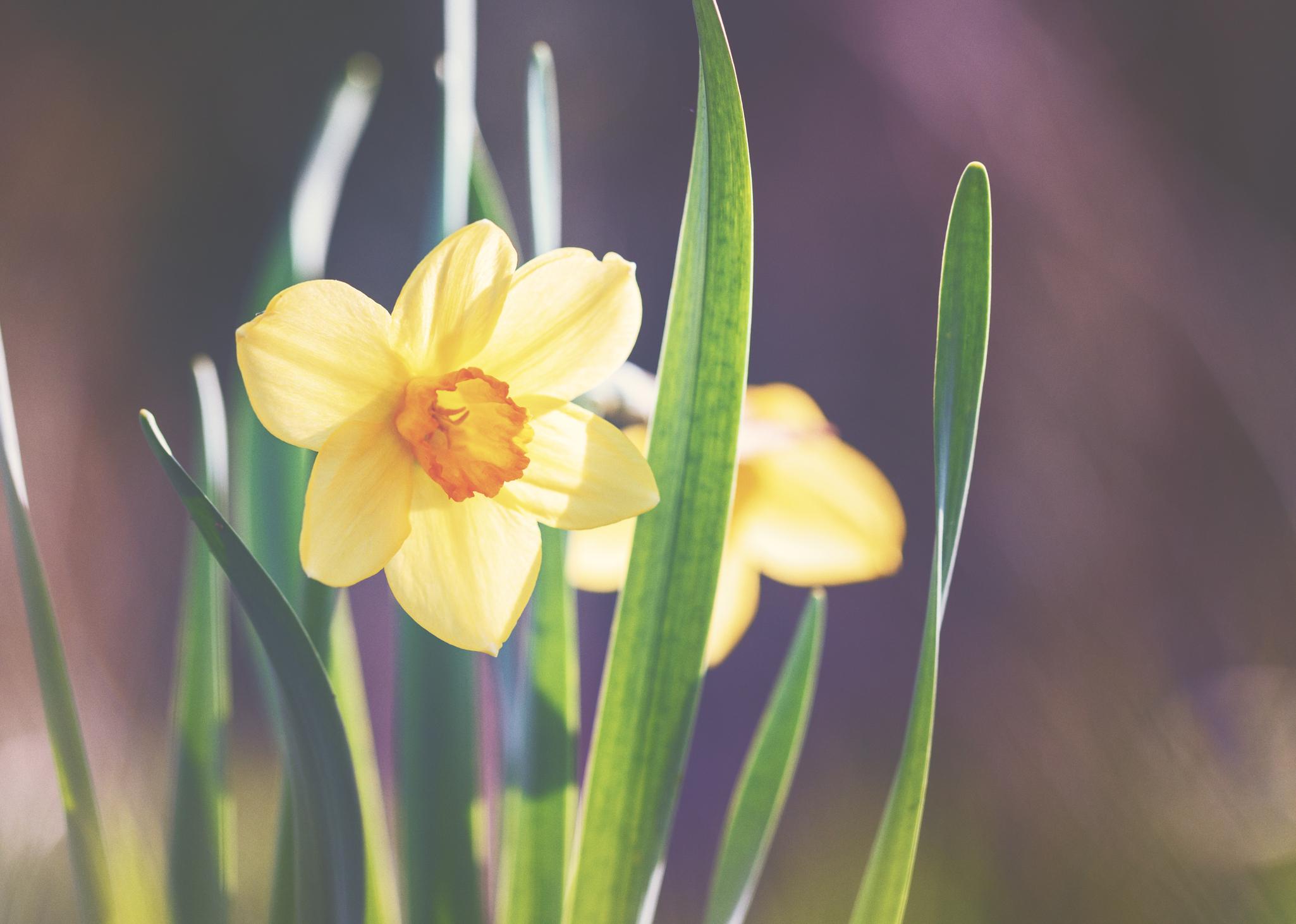 Spring Equals Hope