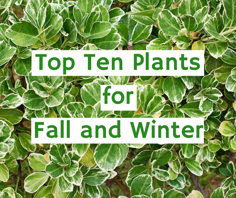 Top Ten Plants for Fall and Winter