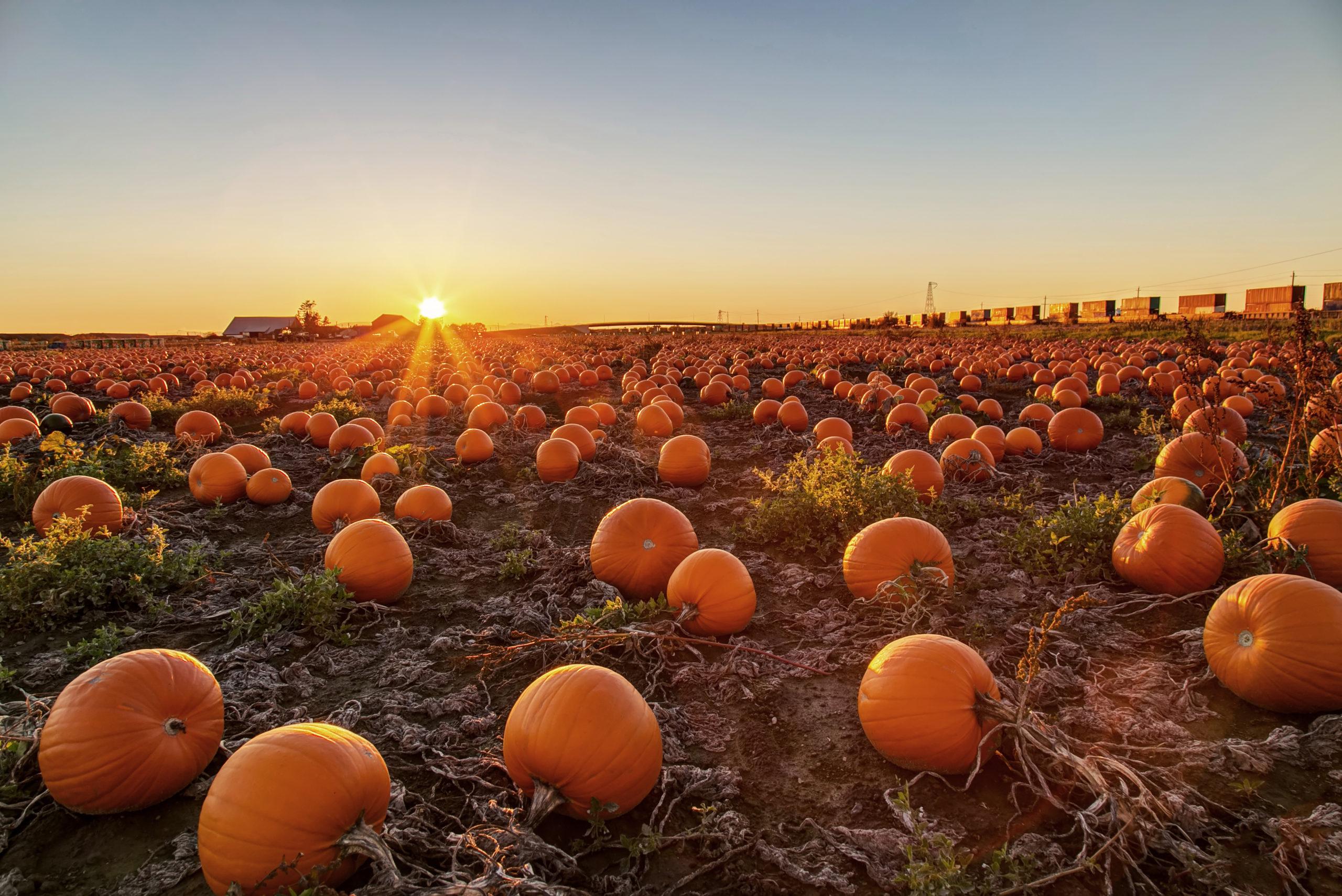 Pumpkins, Corn Mazes & Fall Fun
