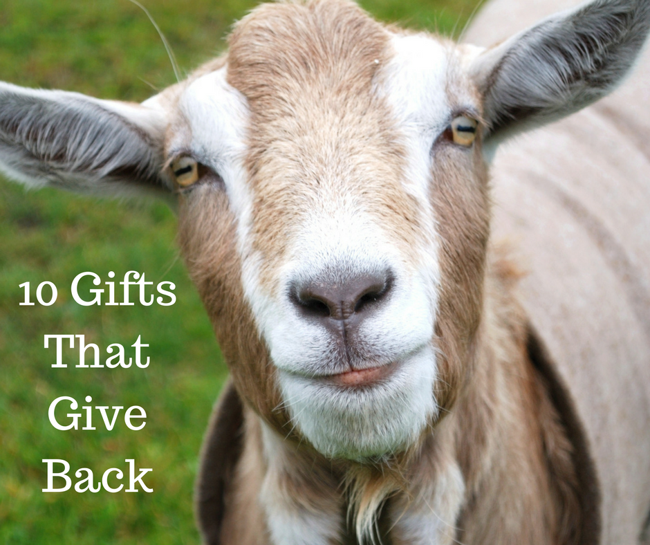 10 Gifts That Give Back