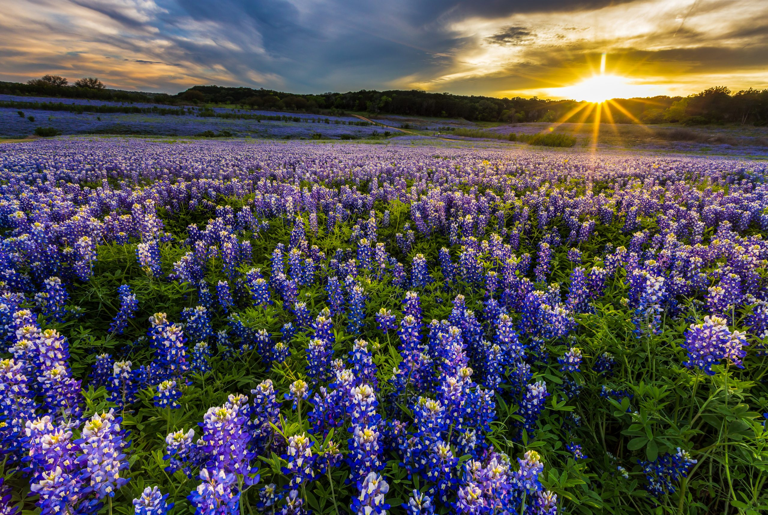 Amazing Places to see Bluebonnets in Austin