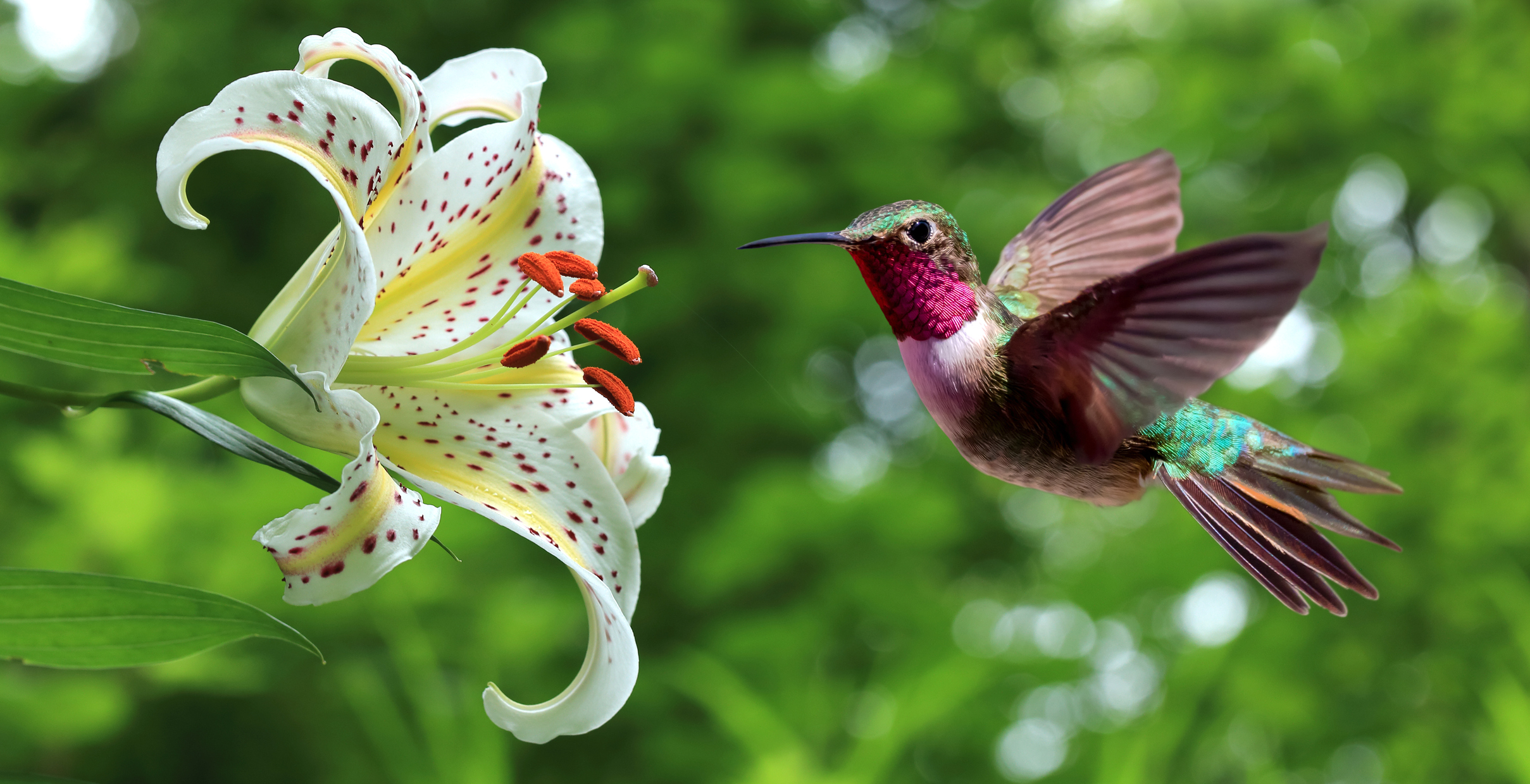Moms Are Like Hummingbirds