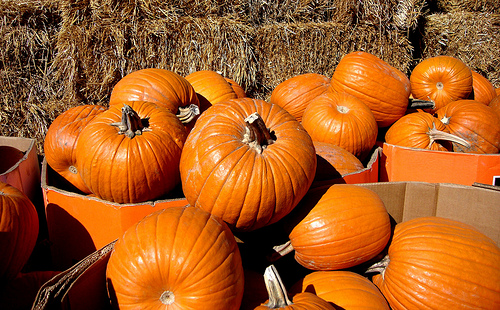 Dry August And September Saved Area Pumpkin Crop