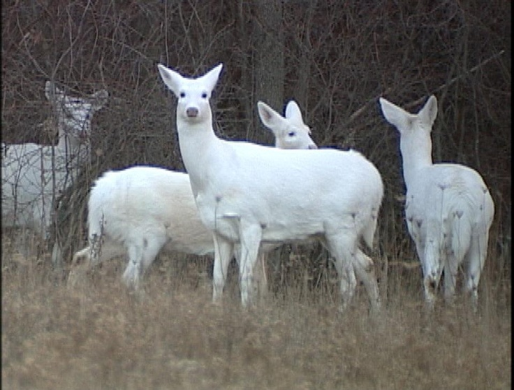 Seneca County Chamber Will Offer Promotional Support For White Deer Tours