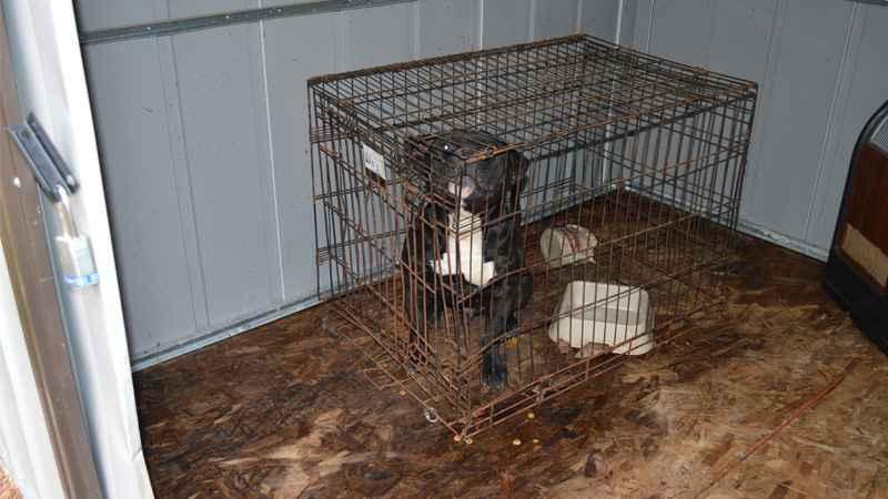 Farmington Man Charged With Animal Cruelty