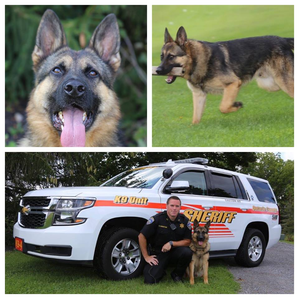 K9 Fennell To Receive Body Armor