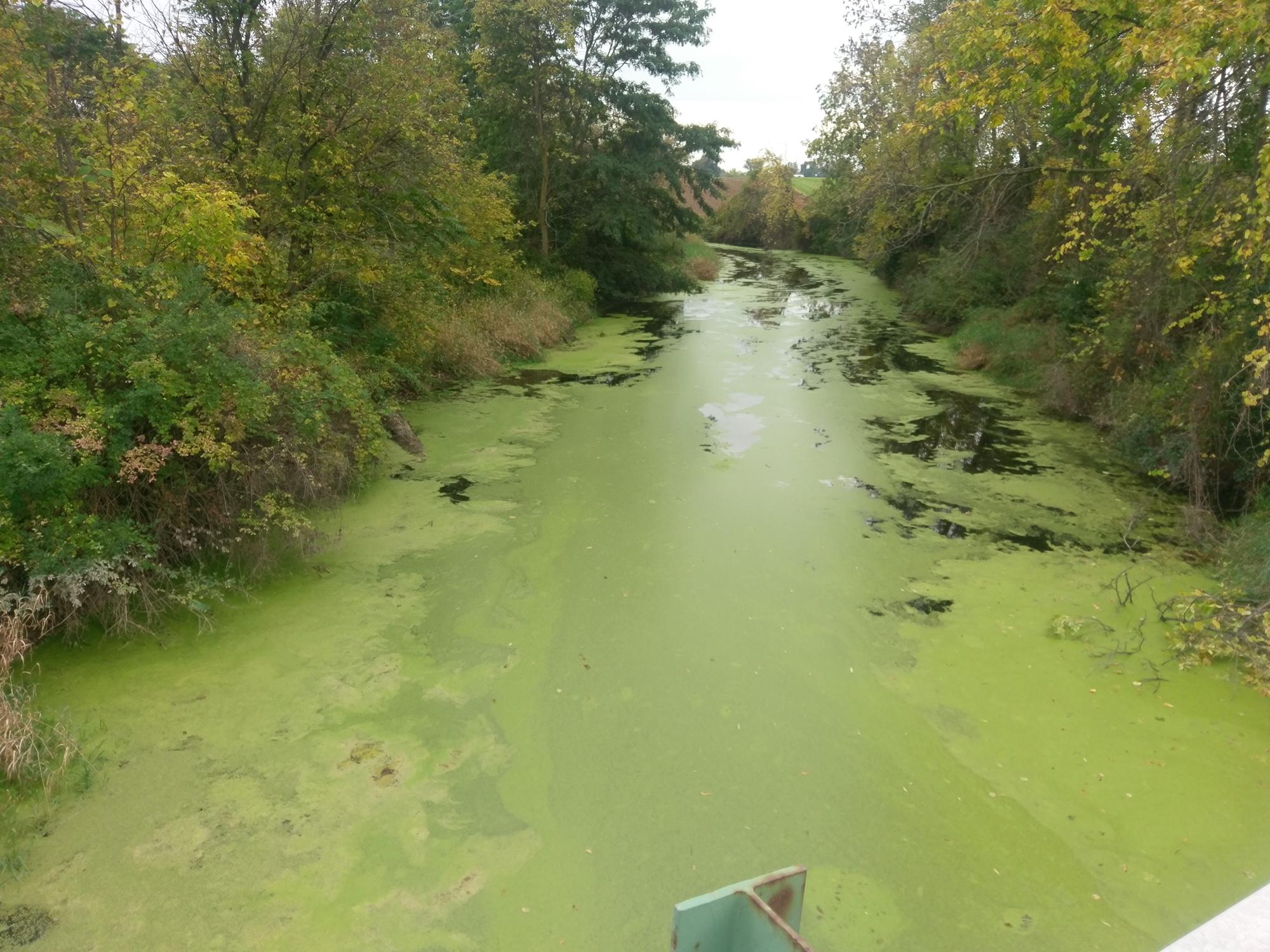 5th Annual FL Harmful Algal Bloom Meeting Next Month