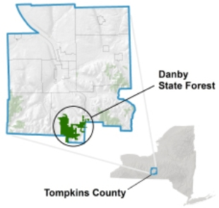 DEC Announces Addition of 144 Acres to Danby State Forest