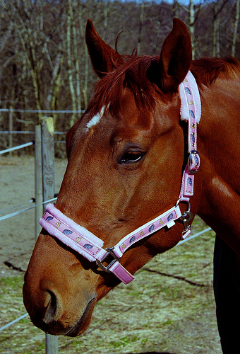 Two Horses Quarantined in Schuyler County