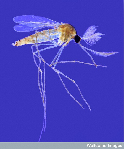 One Dead from West Nile Virus in Monroe County