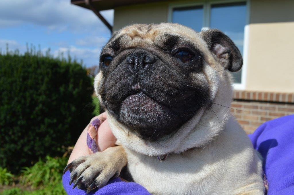 Search For Woman That Dropped Pug Off at Ontario County Public Works