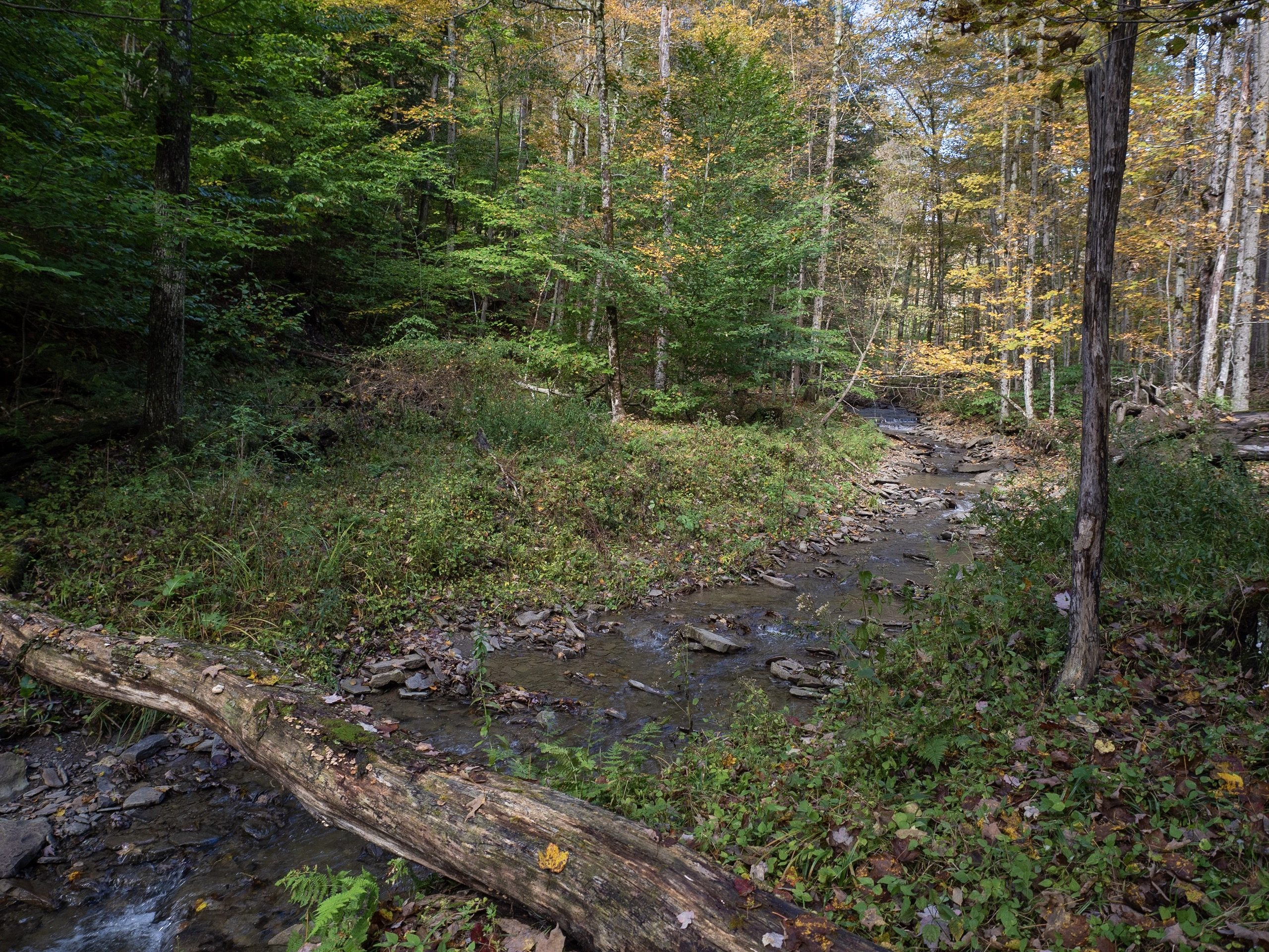 Conservation Easement Protects 89 Forested Acres in Ithaca's Emerald Necklace