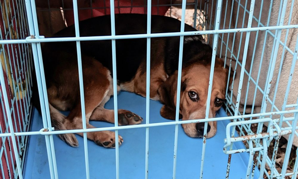 Police: Canandaigua man accused of abandoning dog in Lyons