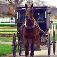 Amish Complying With New Buggy Regulations