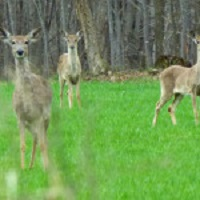 DATCP Quarantines Two Farms with Positive CWD Samples