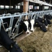Test Your Livestock Feed and Silage for Flood Damage