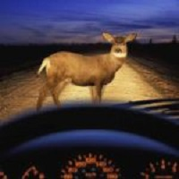 Watch for Deer on the Roads During Fall Rut, Says State Patrol