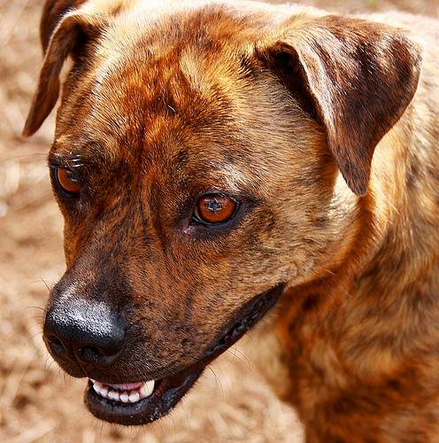 Found: A tan terrier