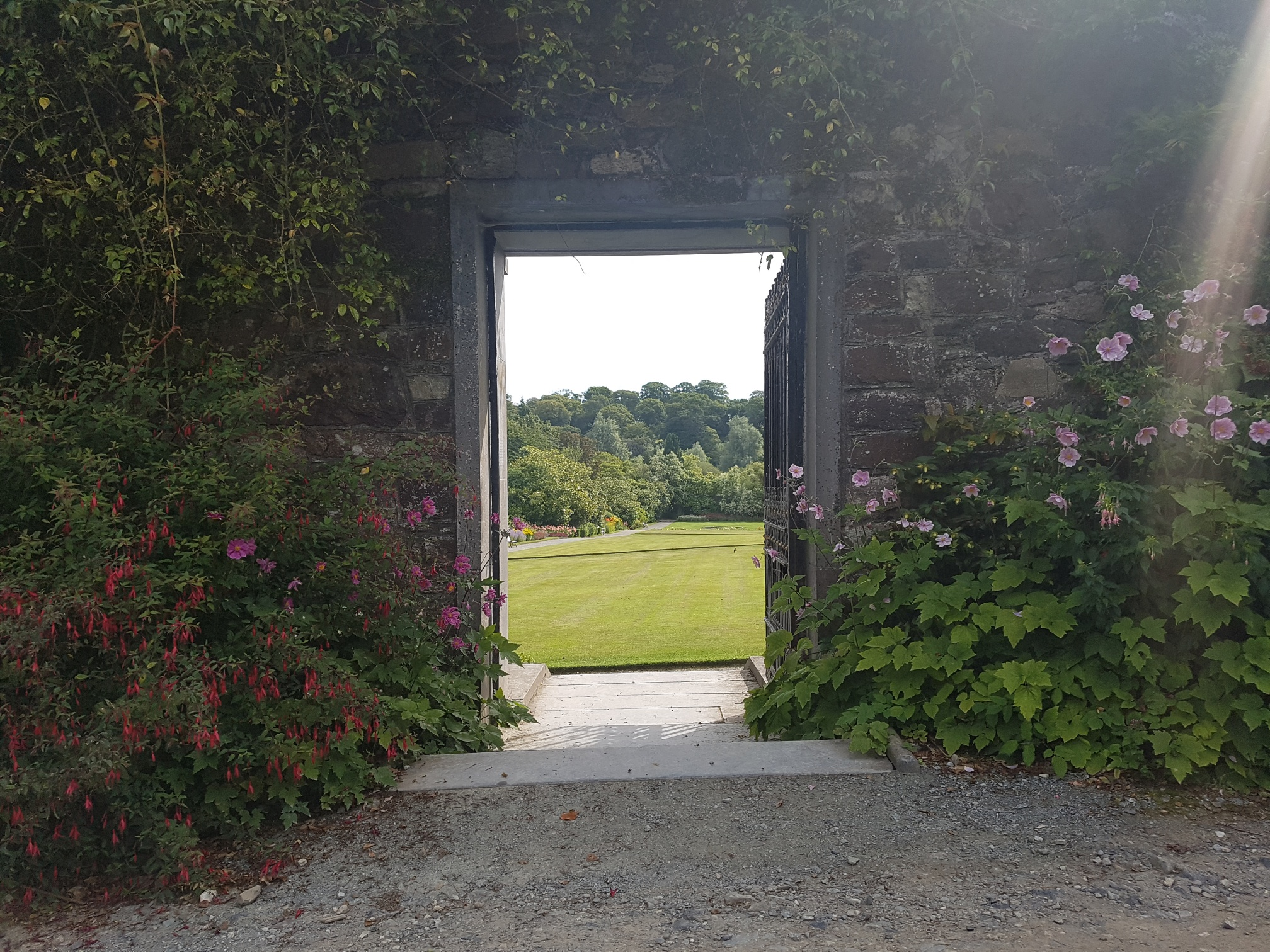 Success of  Waterford Greenway leads to extended opening of Mount Congreve Gardens.