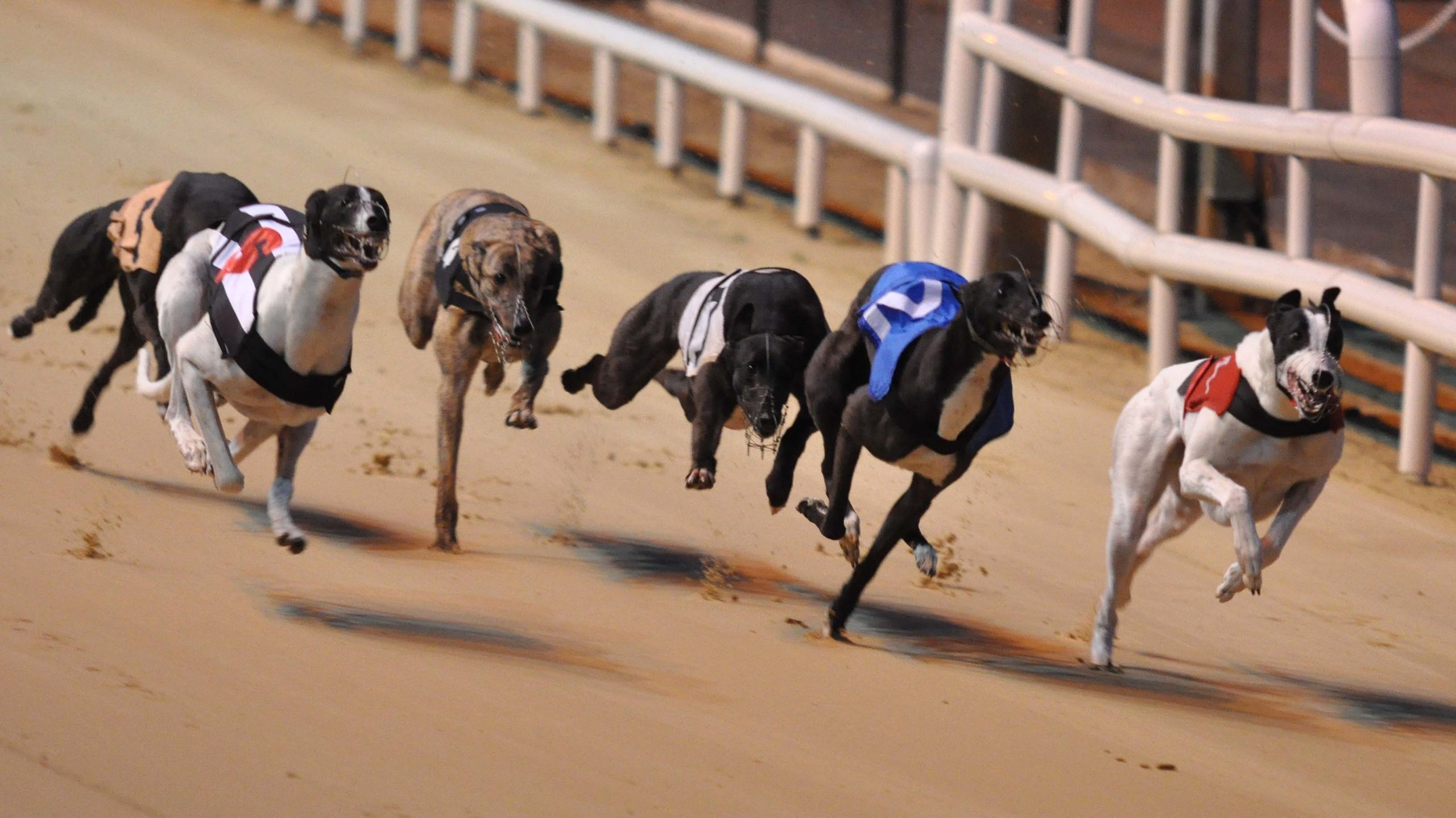 Portlaw bred greyhounds shine in Shelbourne Park